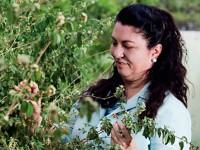 """A professora Mary Anne Medeiros Bandeira coordena o projeto Farmácias Vivas e publicou o livro """"Plantas Medicinais em Versos"""". A obra apresenta 40 poemas, cada um deles dedicado a uma planta. (Foto: Jarbas de Oliveira)"""
