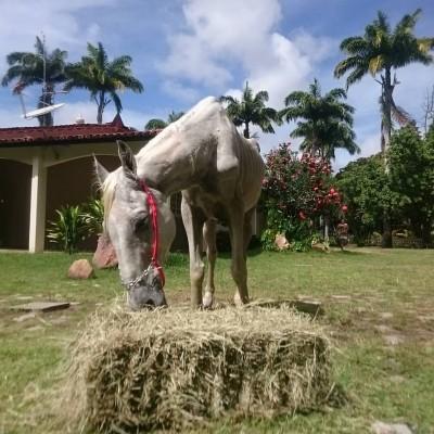 Pé de Pano, o cavalo resgatado pelos voluntários do projeto (Foto: Reprodução/Facebook)