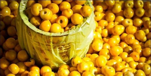 Segundo a pesquisadora Nilza Mendonça, o murici, uma fruta facilmente encontrada no Ceará, começa a desaparecer (Foto: Reprodução/Internet)