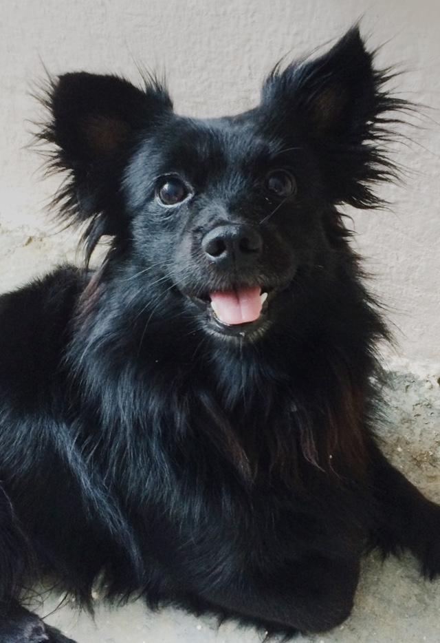 Jéssica descobriu o aumento da próstata de seu cão Severino de 6 anos, quando a professora pediu que ela levasse o cão para realizar alguns exames (Foto: Acervo Pessoal)