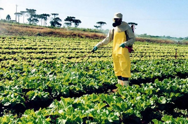 No dia 10 de abril de 2019, o Ministério da Agricultura permitiu a utilização de mais de 30 novos tipos de agrotóxicos. Em 100 dias de governo, mais de 150 substâncias já foram liberadas (Foto: Divulgação/Seab-Paraná)