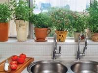 Uma das vantagens da produção doméstica sustentável é ter à sua disposição, a qualquer momento, temperos frescos (Foto: Reprodução/Internet)