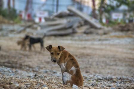 A Lei de Crimes Ambientais considera o abandono animal um ato de mau-trato (Foto: Stopboxstudio/iStock)
