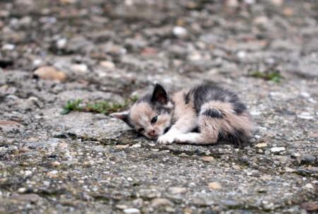 Espaços públicos onde protetores de animais atuam são os principais pontos de abandono (Foto: Getty Images/iStockphoto)