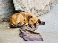 Segundo a Coordenadoria Especial de Proteção e Bem-Estar Animal de Fortaleza, 132 mil cães e gatos são vítimas de maus-tratos na capital cearense (Foto: AlxeyPnferov/iStockphoto)