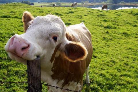 No Brasil, cerca de 10 mil animais são mortos a cada minuto para a alimentação humana (Foto: Synegog/Reprodução)