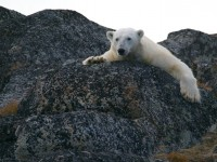 O derretimento das calotas polares é uma das consequências do aquecimento global abordadas no radiodocumentário (Foto: Andy Brunner/Unsplash)