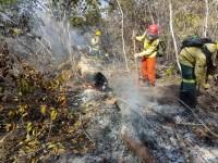 Segundo especialistas, a área da Floresta Nacional do Araripe atingida por incêndios no final de 2019 levará, aproximadamente, 30 anos para ser recuperada (Foto: PrevFogo/Divulgação)