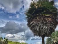 Administrada pelo Centro de Ciências Agrárias da UFC, a Fazenda Raposa foi reconhecida, pelo Governo do Ceará, como Área de Relevante Interesse Ecológico (Foto: Divulgação/SEMA)