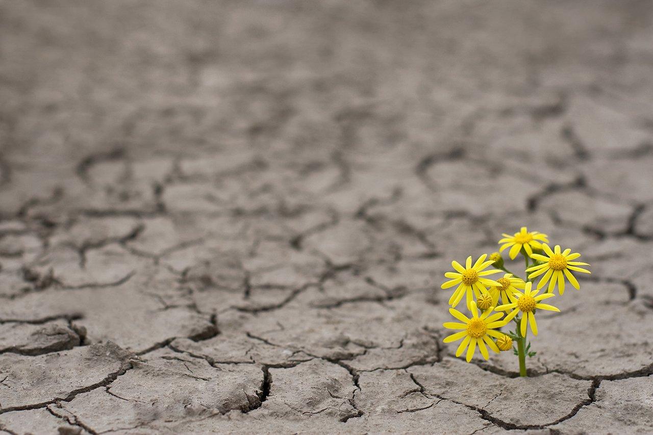 Segundo a psicóloga Ana Raquel Sousa, uma pessoa resiliente vê o lado positivo das coisas e se adapta a situações inesperadas, sempre aprendendo com as experiências de vida (Imagem: Getty Images)