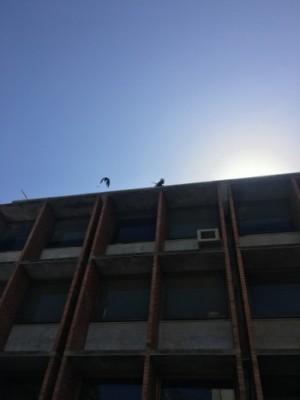Segundo a arquiteta Beatriz Diógenes, o concreto aparente, os brees e a laje impermeabilizada remetem claramente ao repertório da arquitetura moderna brasileira (Foto: Thais Vieira)