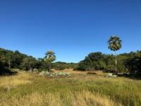 As dunas da Sabiaguaba podem ser de areia, mas também podem ser cobertas por florestas. No local, encontram-se matas de tabuleiro, carnaubais e restingas arbóreas (Foto: Beatriz Azevedo)