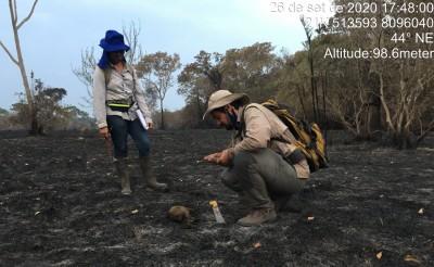 """Para Thiago Semedo, """"as queimadas podem elevar o risco de extinção de algumas espécies, principalmente daquelas que se locomovem de maneira mais lenta"""" (Foto: Arquivo Pessoal/ Thiago Semedo)"""