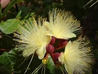 Inventário da Flora Cearense catalogou 2.465 espécies diferentes de plantas nativas (Foto: Reprodução/Internet)
