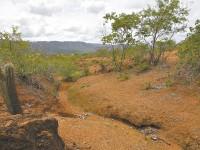 No Ceará, existem 94 unidades de preservação da caatinga nos níveis federal, estadual e municipal (Foto: Reprodução/Internet)