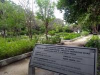 Dia 21 de maio já foi instituído como Dia da Planta Medicinal em Fortaleza pela lei municipal 7830/1995 e depois estadualmente pela lei 13802/2006 (Foto: Reprodução/Internet)