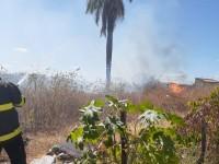 Até o final deste ano, segundo estimativas, os incêndios florestais no Ceará deverão superar a média histórica (Foto: Reprodução/Internet)