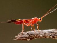 O lançamento do Inventário da Fauna: Invertebrados do Ceará acontecerá hoje (10), às 14h, no canal da SEMA no Youtube (Foto: Reprodução/Internet)