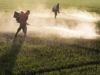O sumário executivo do dossiê está disponível no portal da Campanha Permanente contra os Agrotóxicos e Pela Vida, no site contraosagrotoxicos.org (Foto: Arquivo EBC)